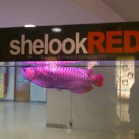 Super Red Arowana,shelookRED
